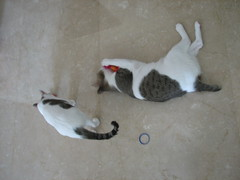 Mandy_Merlea_catnipping_20061021