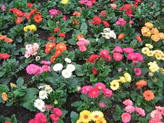 Blommigt