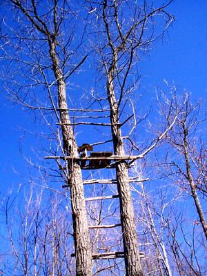 treestand made of sticks