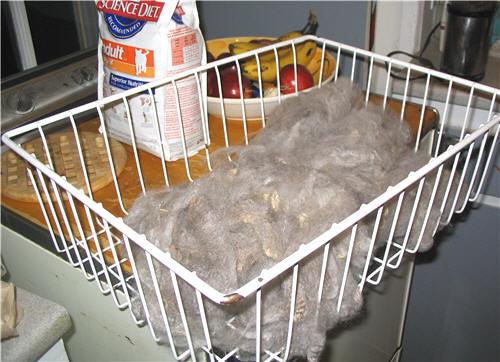 Merino fleece in a metal basket on a kitchen counter - toison de merinos dans une panier de métal sur un comptoir de cuisine