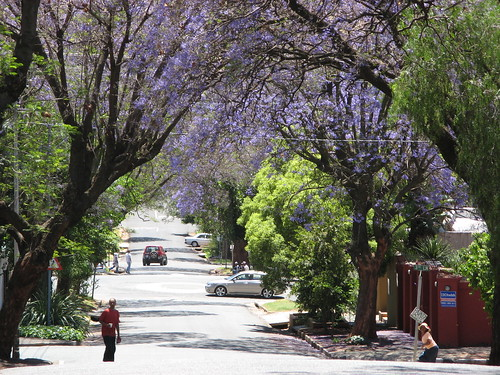 A street in Melville, Joburg
