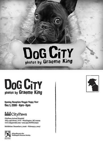 CityPaws Postcard