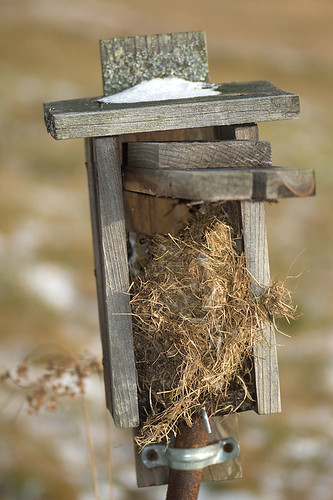 What is that in my bluebird box?