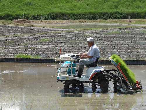 Máquina de arrozal
