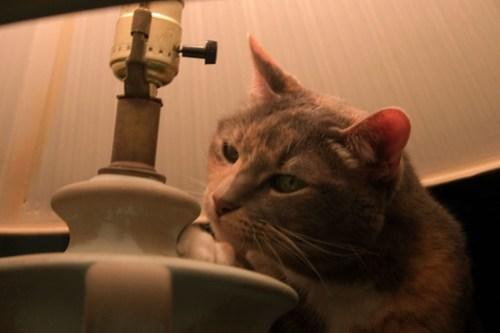 Lamp Cat