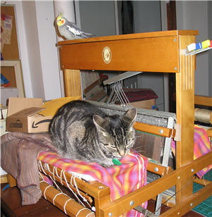 Cockatiel et chatte tigrée grise sur un métier à tisser - Cockatiel and grey tabby cat on a weaving loom