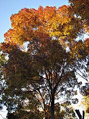 tree-0-