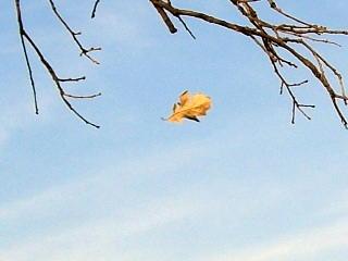 Ft. Greene Park Leaf