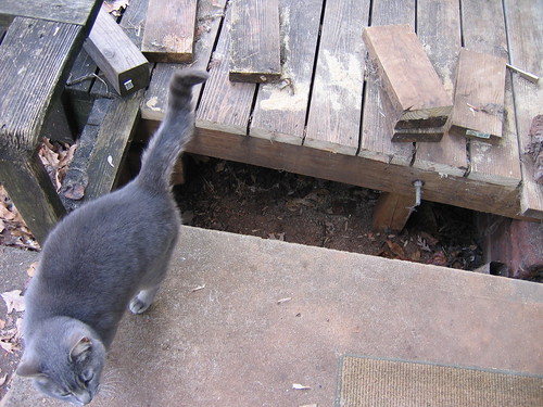 Deck cut for cat house