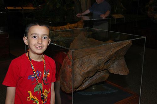 Museum of the Rockies - Ankylosaurus Skull