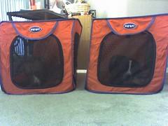 pup tents