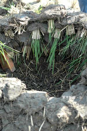 長著草的土塊
