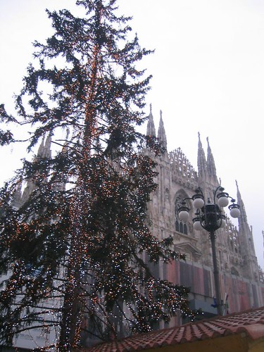 The Comune Tree
