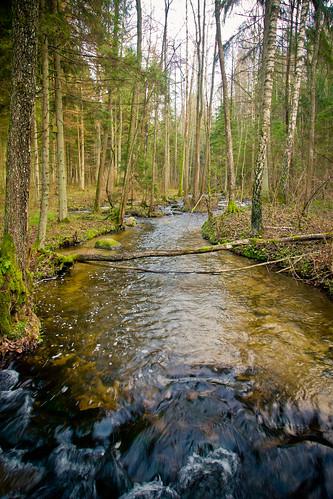 Saidės upelis   Saidė stream