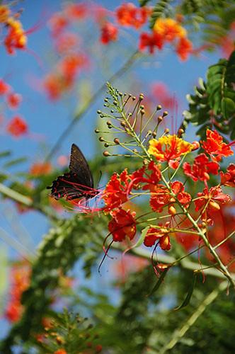 Xochilcalco - 32 Butterflies