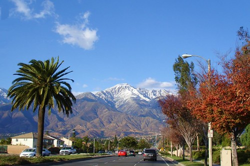 Palm trees and snow...Welcome to California