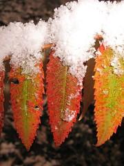 Nov_Dec_2006 075