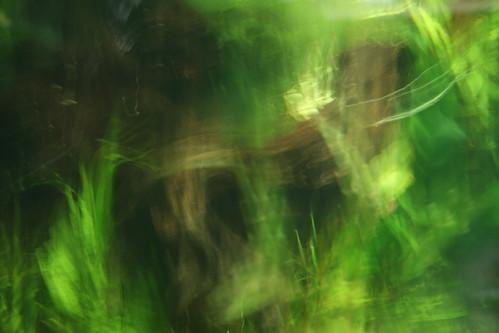 Green Under Water