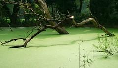 Jardín botánico de Calcuta-Kolkata