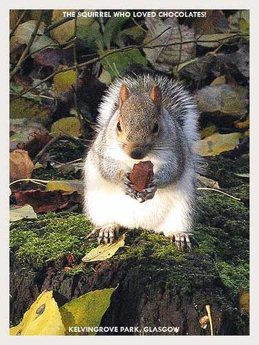 Squirrels at Kelvingrove