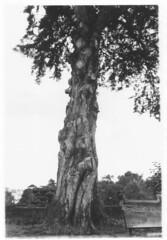 Foto de un Árbol