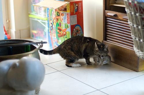 Knippe zei de katte