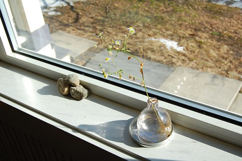 Windowsill (by jeninmaine)