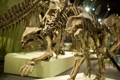 Chinese dinosaurs