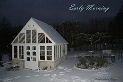Early Morning- My green house