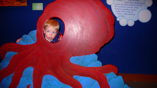 Alex the Octopus