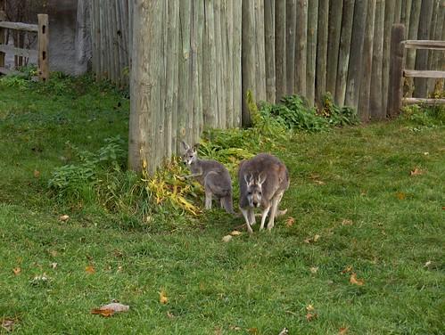 Det Zoo Vol 111807 013