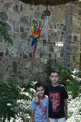 La Antigua  - 06 Santo Domingo macaws