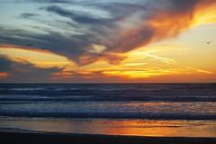 Ocean Beach 7