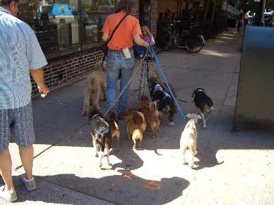 dogsitter