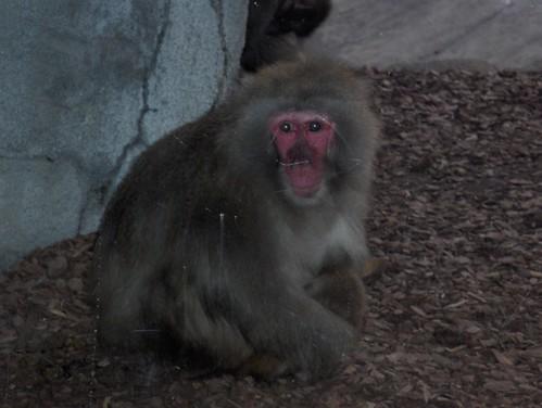 Det Zoo 123007_0125