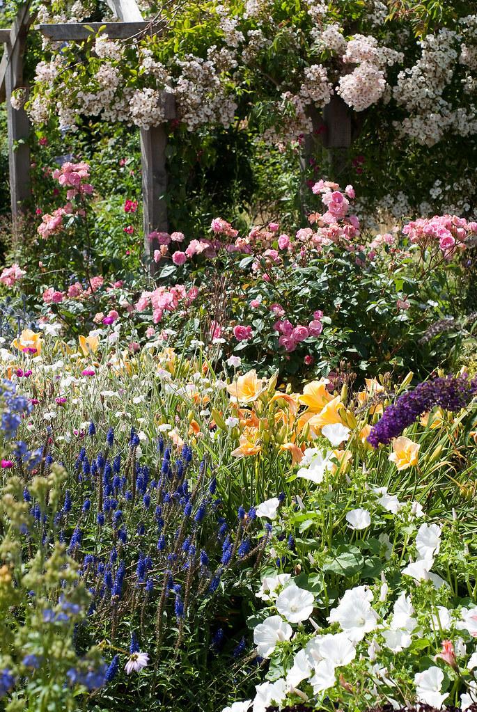 Rosemoor cottage garden