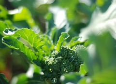 Broccoli Forthcoming