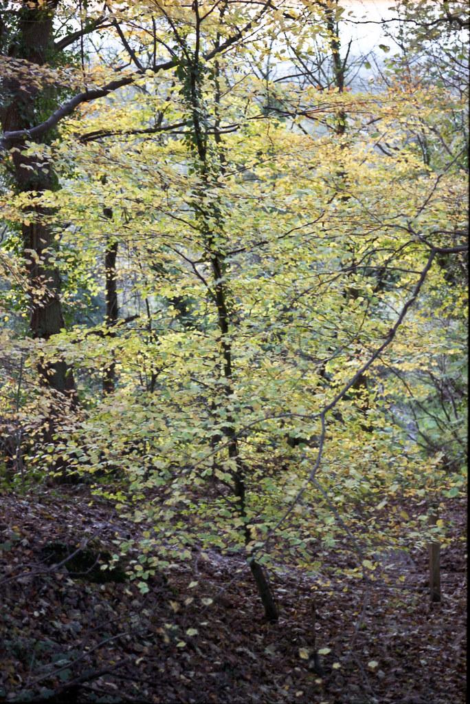 C S Lewis Nature Reserve - 11