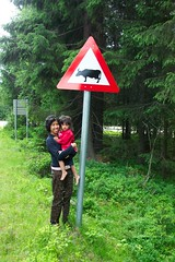 Road Sign --- Cow