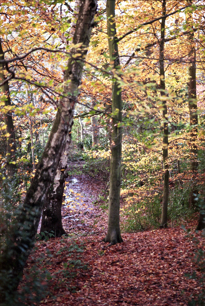 C S Lewis Nature Reserve - 8