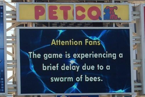 Bee Delay