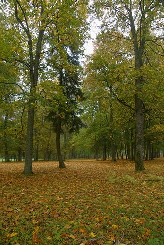 Pikeliškių dvaro parkas