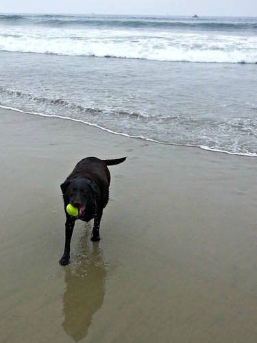 Doggie Beach_772013_7