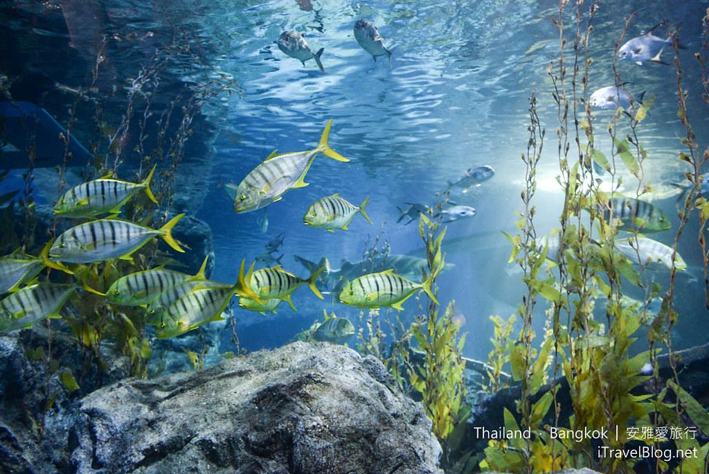 Siam Ocean World Bangkok 42