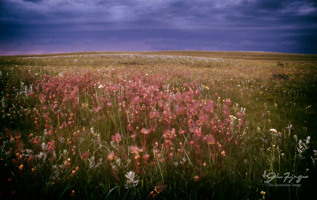 Storm And Wild Flowers