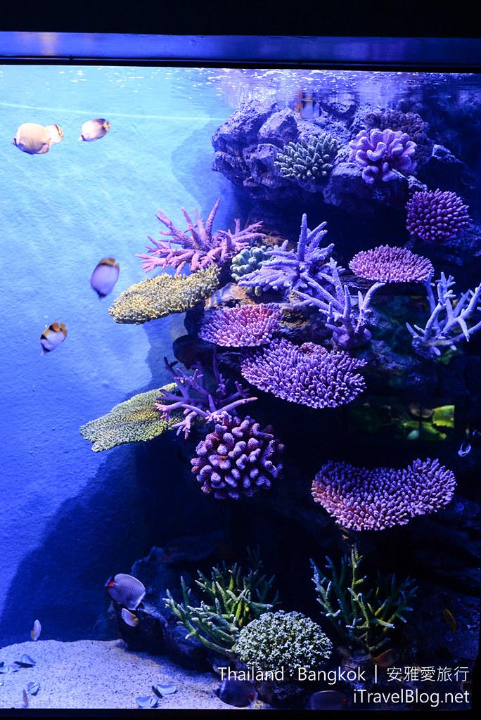Siam Ocean World Bangkok 16