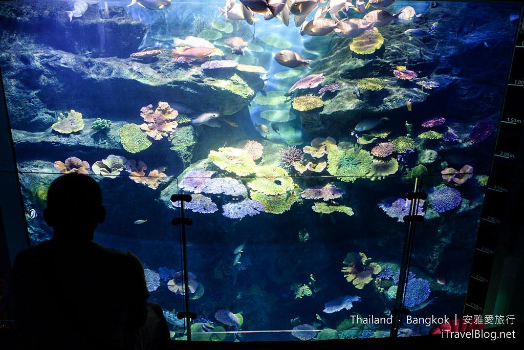 Siam Ocean World Bangkok 18