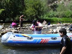 The grey raft returns