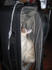 No Cinny you can't come with