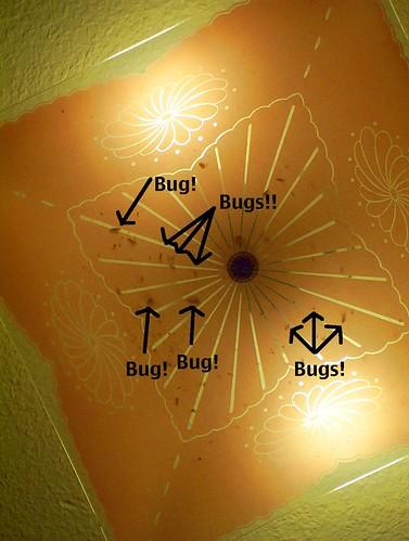 bugs in light fixture